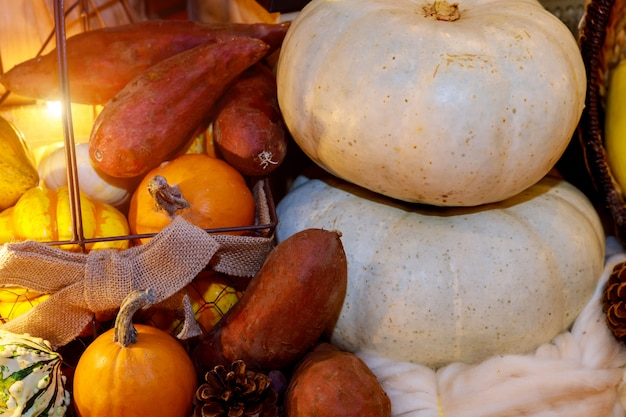 Pumpkins with different colours seasonal fruits and vegetables thanksgiving day concept