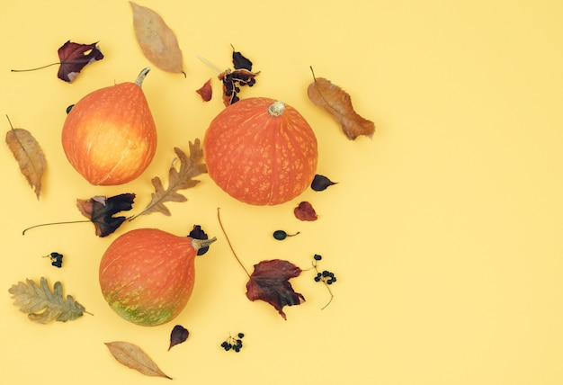 Pumpkins with dry leaves on a yellow background. copy space.