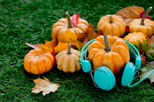 Pumpkins with leaves and headphones on green lawn