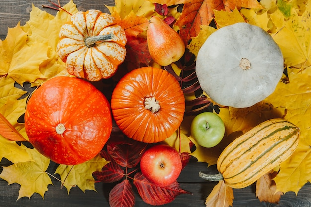 Pumpkins with ripe apples and pear on colorful maple leaves. autumn seasonal image.