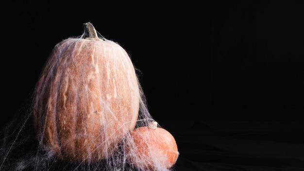 Pumpkins with spiderweb on black background