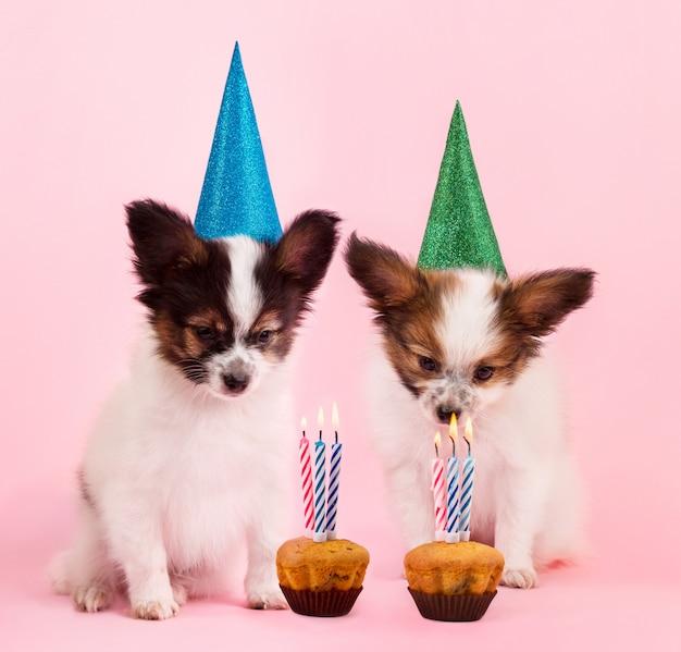 誕生日を祝う子犬