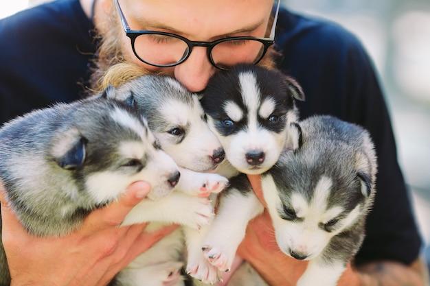 Щенки сибирской хаски. помет собак в руках заводчика. маленькие щенки.