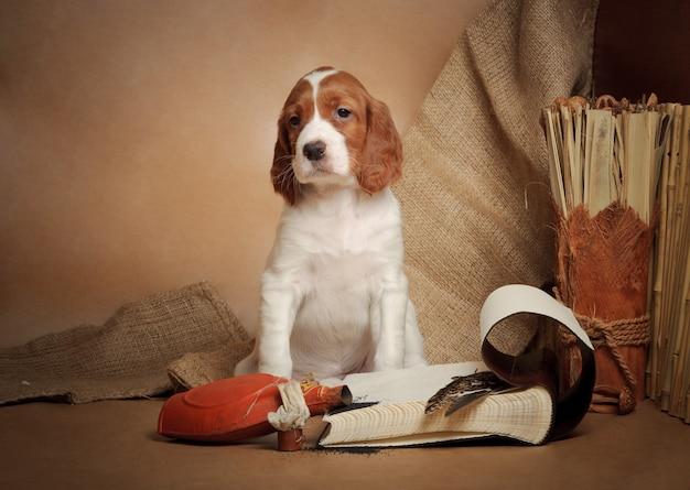 Принадлежности для щенков и охоты, горизонтальные, ателье