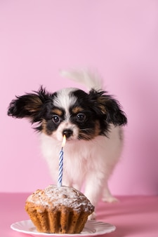 Puppy blows out a candle