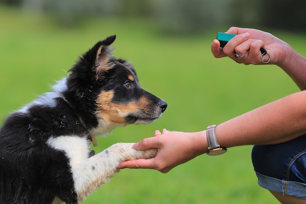Clicker Training Basic Commands – SIT command