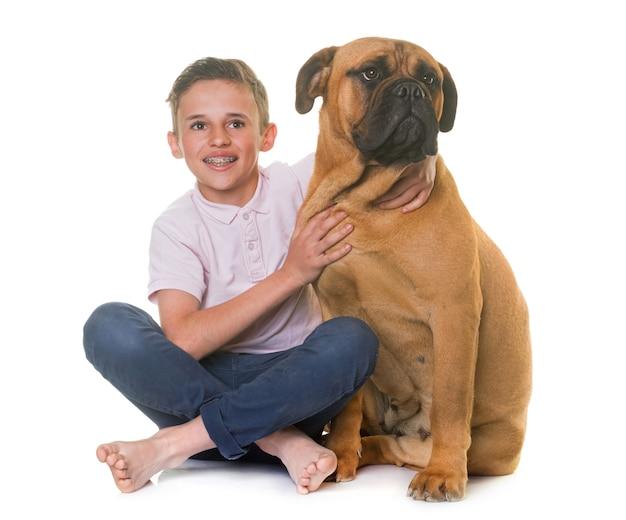 Puppy bull mastiff and child