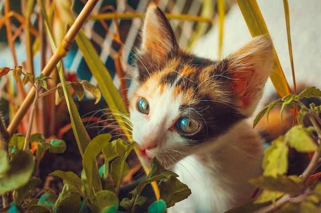 Щенок кота на фоне цветущего балкона квартиры
