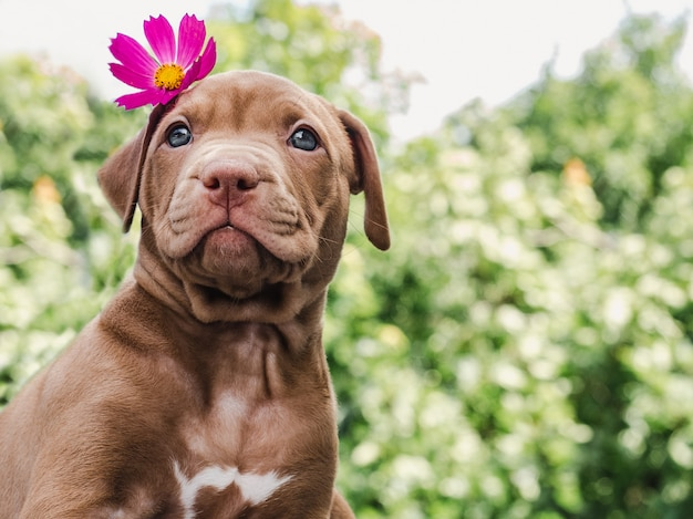 Puppy of chocolate color and bright flower