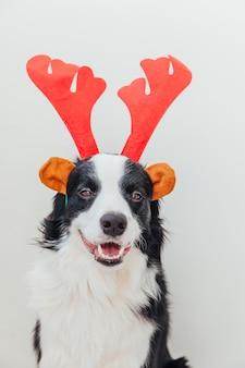 Бордер колли щенок в новогоднем костюме шляпа с рогами благородного оленя на белом фоне