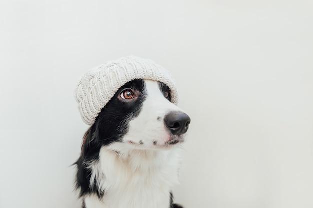 Бордер колли щенок в теплой вязаной одежде белой шляпе, изолированные на белом фоне