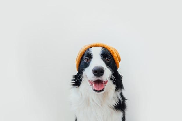 Бордер колли щенок в теплой вязаной одежде желтой шляпе, изолированные на белом фоне
