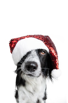 Puppy dog christmas wearing a red santa claus hat. isolated on white background