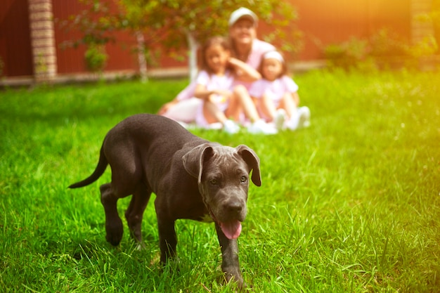 Puppy dog and defocused family with children in summer in the green garden