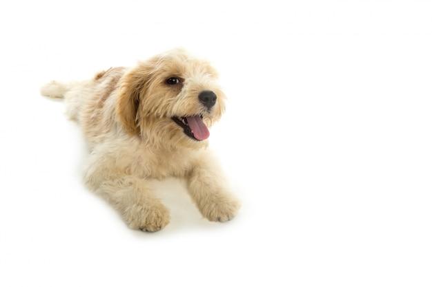 Щенок собака на белом фоне