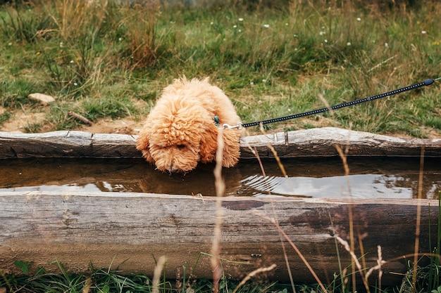 강아지는 자연에서 물을 마신다