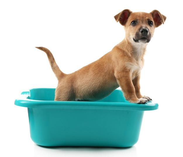 흰색 표면에 고립 된 목욕에 강아지