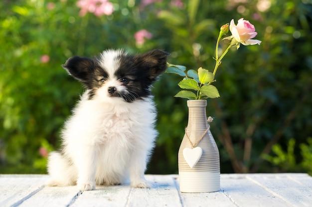 Щенок в розовом саду