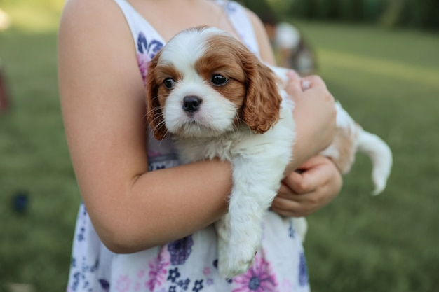 Puppy king charles spaniel on his hands against the background of nature