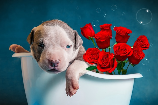 The puppy lies in the bathroom with a bouquet of roses. congratulations on international women's day. love confession