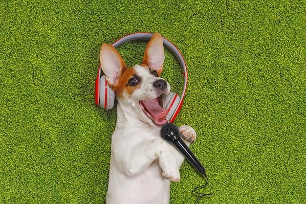 緑のカーペットの上に横たわる子犬