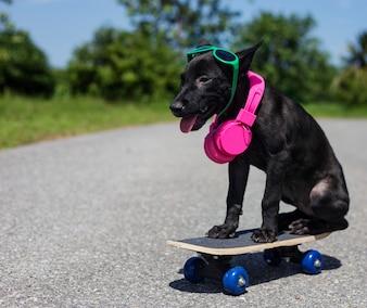 Puppy on a skateboard