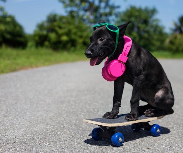 子犬、スケートボードに