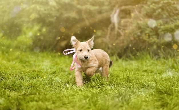 緑の草の上の子犬。レスキューアニマル。おとぎ話の写真。