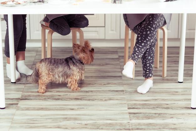 가족의 발 근처 부엌 바닥에 강아지