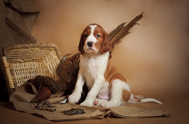 Puppy and pheasant