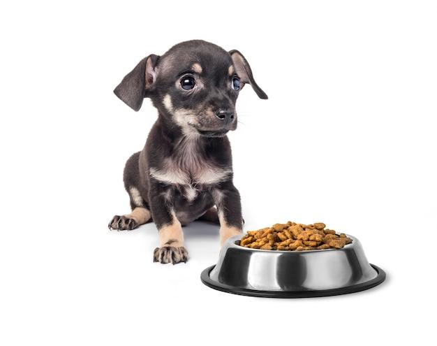 Той терьер щенок ест еду, изолированные на белом фоне