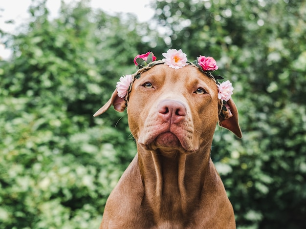 Щенок с цветами