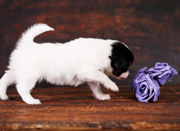 Puppy with a roses