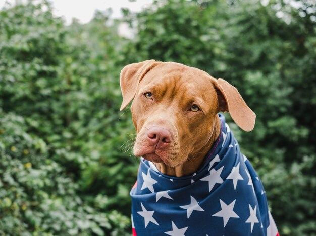 アメリカの国旗の子犬