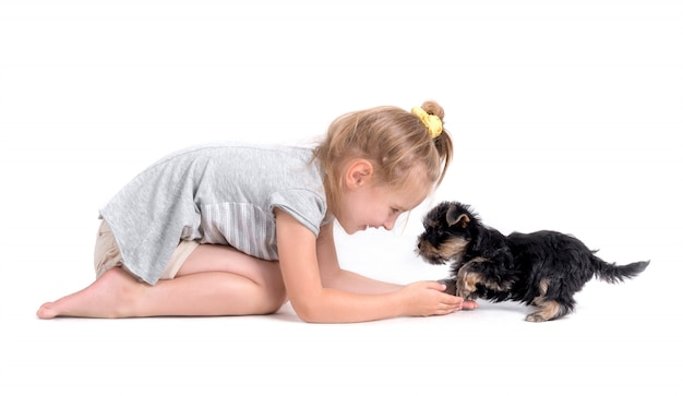 Puppy york and little girl
