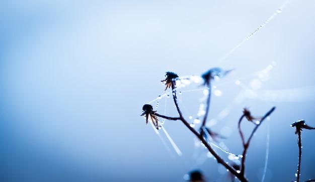말린 꽃에 순수한 이슬 방울