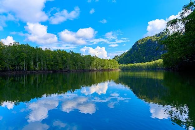 Река ландшафта чистой природы среди мангровых лесов.