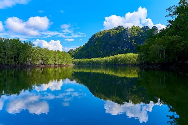 Река ландшафта чистой природы среди мангровых лесов. Premium Фотографии