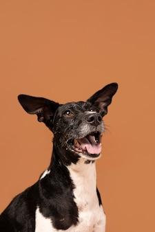 Cane di razza adorabile in uno studio a