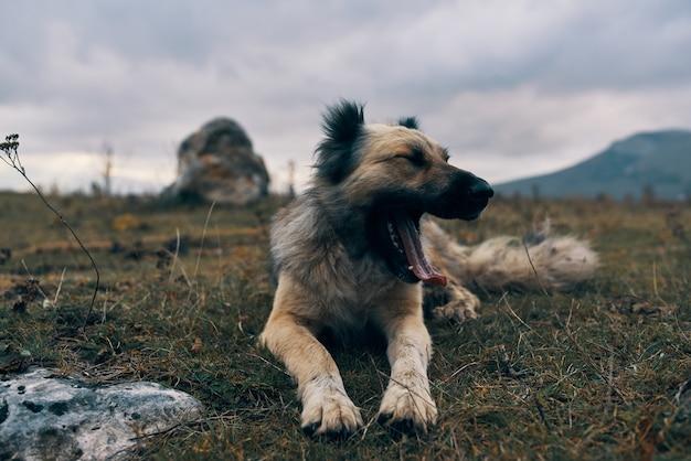 草の友情旅行に横たわっている屋外のフィールドで純血種の犬