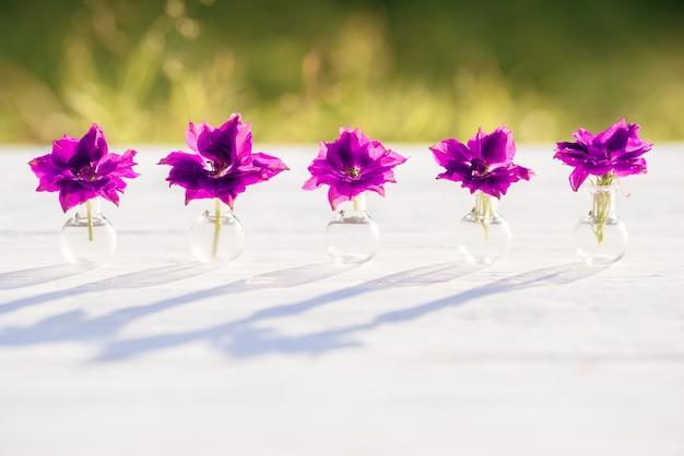 ヘリクリサムの紫と紫の花、村の夏の夜、暖かく晴れた夕日、屋外の影。ガラスフラスコ内のバタニカの美しい植物。