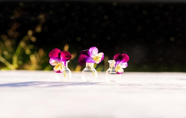 パンジーの紫と紫の花、村の夏の夜、暖かい晴れた夕日、屋外の影。ガラスフラスコ内のバタニカの美しい植物。