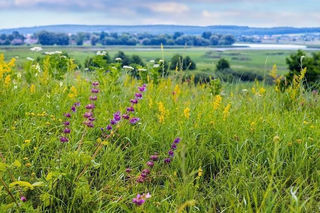 遠くの緑の牧草地、森、川に咲く紫と黄色の野の花