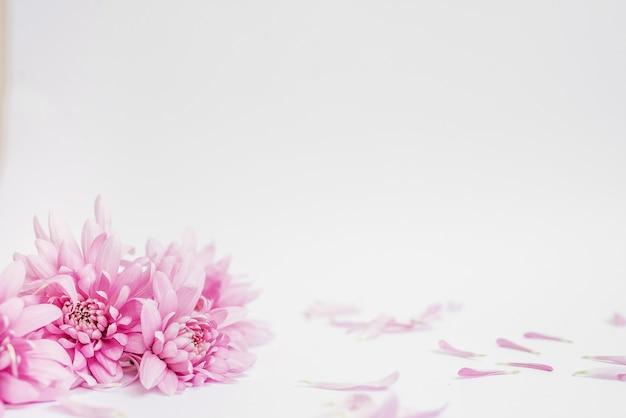 Фиолетовые цветы астры крупным планом