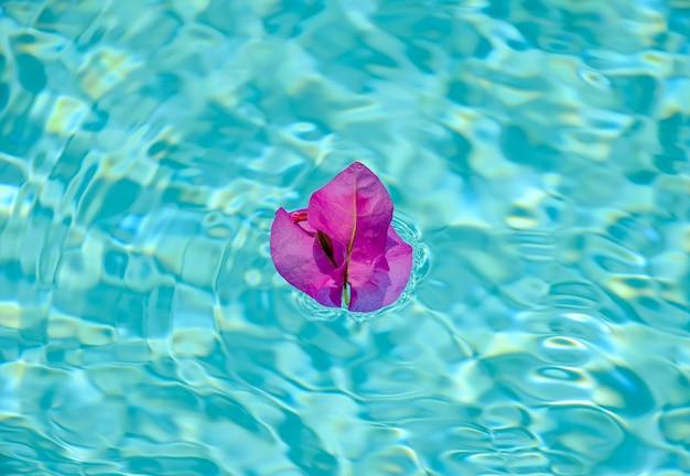 수영장의 표면에 보라색 부겐빌레아 꽃.