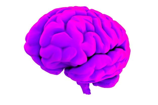 흰색 배경 3d 렌더링에 보라색 두뇌
