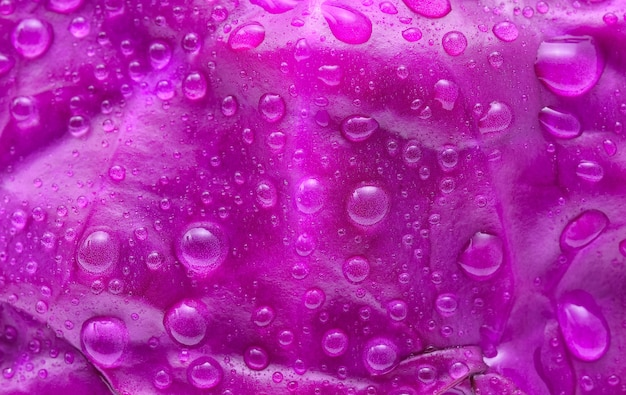 水滴の背景と紫キャベツ。