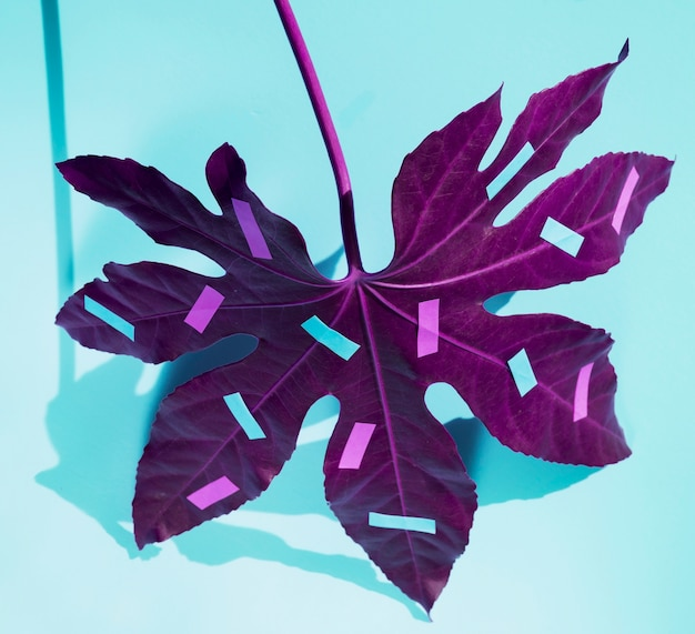 Purple chestnut leaf with stationery colourful items