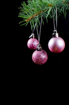 Purple christmas balls on green spruce branch
