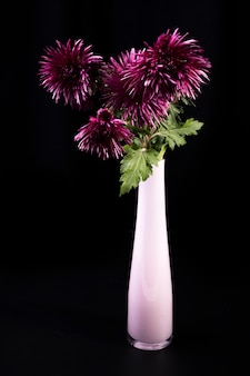 暗い背景にピンクのガラスの花瓶の紫色の菊の花束。秋の花の背景